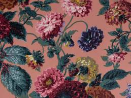 Dahlias Toscana Wallpaper
